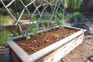 Raised Bed Vegetable Garden with Redwood Trellis