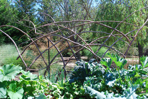 Redwood Branch Trellis