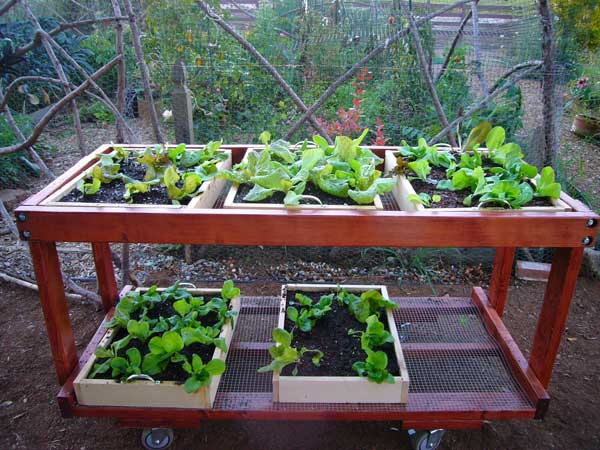 Salad table - Salads can grow pots eat fresh ...