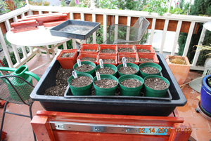 Seed Starting-Write out Plant Tags for Each Variety