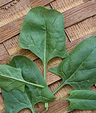 Growing Spinach—'Indian Summer'