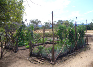 Stanford Community Farm Plot 2