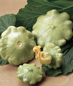 'Peter Pan' patty pan summer squash produces pale green, dense patty pan squash that are perfect for grilling.