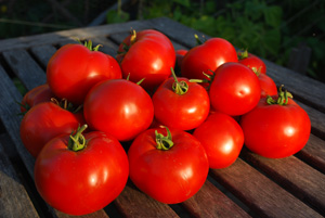 Tomato Varieties—'Big Beef' Stack