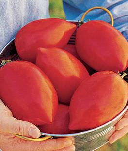 Big Mama' Super Paste Tomato