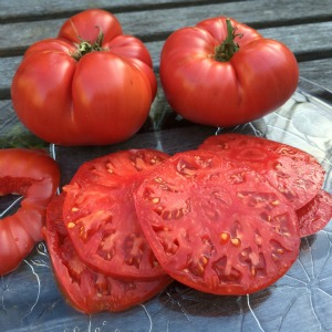 Beefsteak Tomato Varieties—'Caspian Pink' is a beautiful heirloom beefsteak tomato