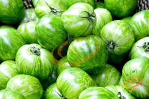 Salad Tomato Varieties—'Green Zebra', a tart green heirloom salad tomato