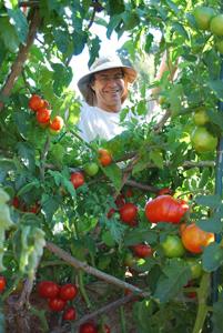 Steve Tending the Tomato Temple