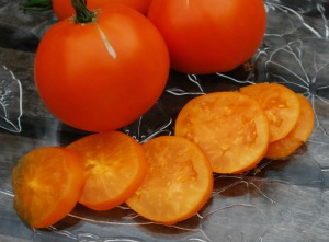 Salad Tomato Varieties—'Valencia' is a sweet, almost seedless orange tomato with a citrussy tartness