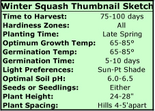 Growing Winter Squash Thumbnail Sketch