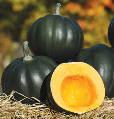 'Honey Bear' Acorn Squash