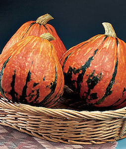 'Lakota' heirloom winter squash are large and colorful, orange splotched with green streaks.