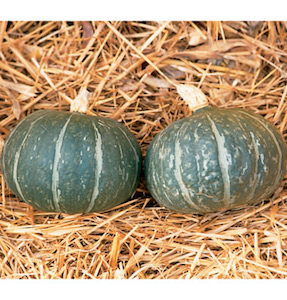 Winter Squash Varieties—'Cha Cha' is one sweet, flaky kabocha squash.