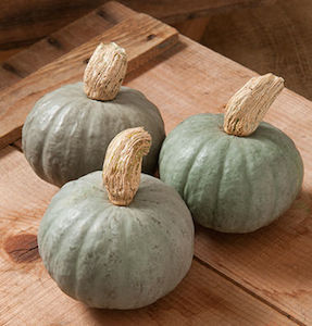 Winter Squash Varieties—'Shokichi Shiro' produces small, 1-1 1/2 lb (3/4 kg) kabocha squash.