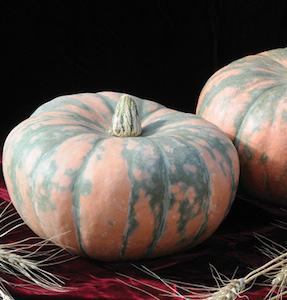 'Speckled Hound' Heirloom Winter Squash