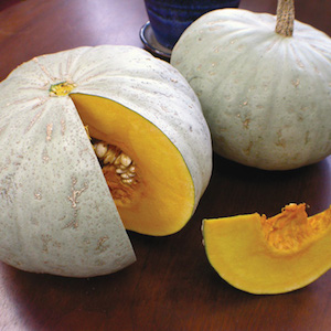 Winter Squash Varieties—'Sweet Meat'