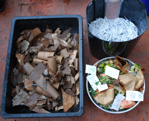 Starting Your First Worm Bin Tray: Bedding and Food