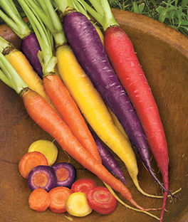 'Kaleidoscope Mix' Multi-Colored Carrot Seed Blend