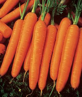 'Scarlet Nantes' Carrots
