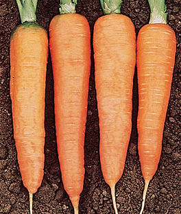 'Touchon' Carrots
