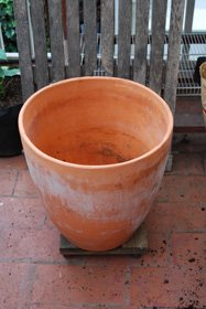 A large (15-gallon–45-50cm) Terra-Cotta Pot is a Good Choice for Growing Tomatoes in Containers