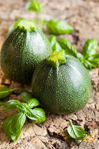 'Cocozelle' is a beautiful heirloom zucchini, leaf green with darker green streaks.