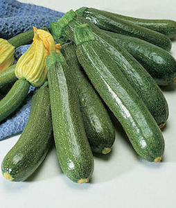 'Fordhook' is an heirloom zucchini variety that's been around for years.