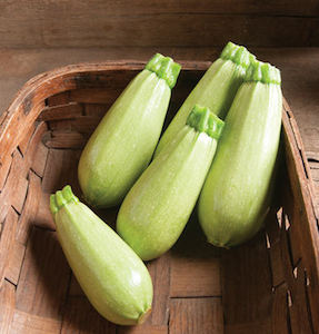 'Magda' is a pale green, squat Middle Eastern cousa-type squash that's dense and flavorful.